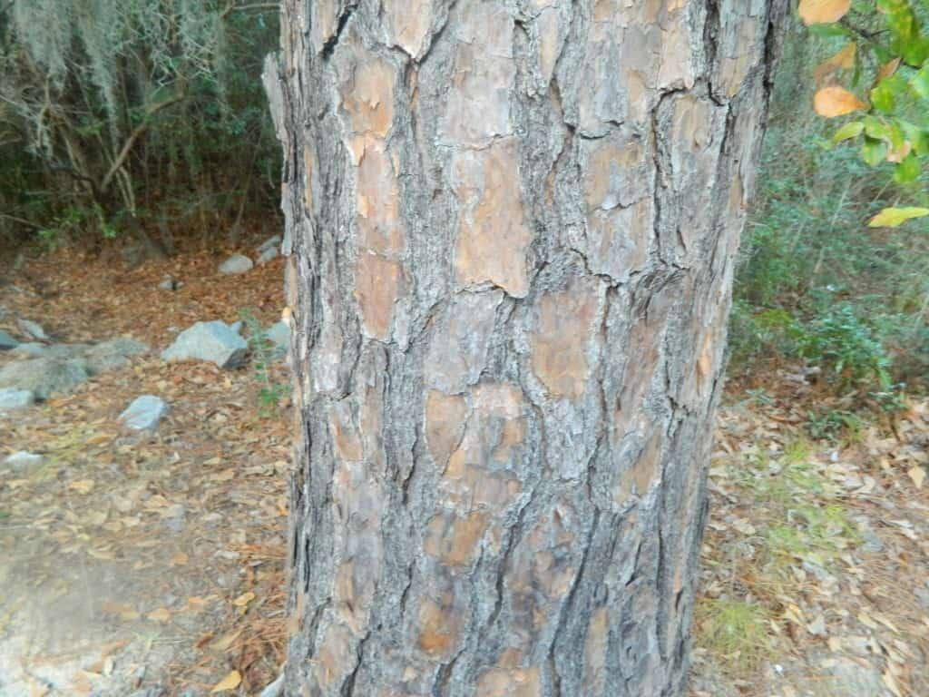 rough bark on winter nature scavenger hunt for preschoolers