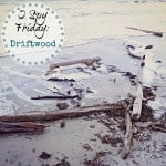 I Spy Friday: Driftwood