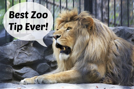 Best Zoo Tip Ever!