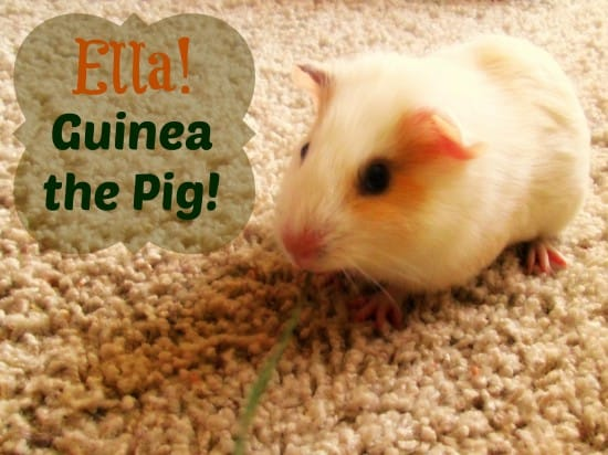 Ella!  Guinea the Pig!
