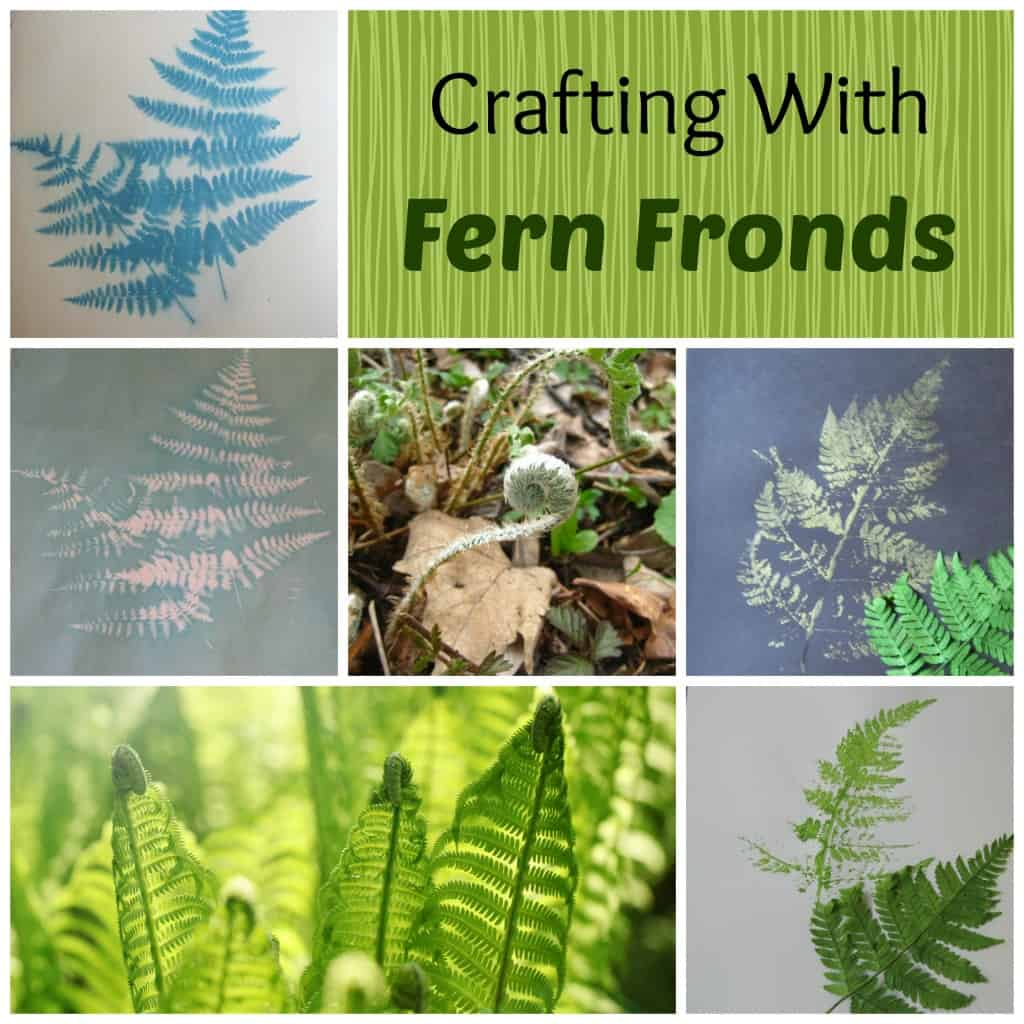 fern fronds collage