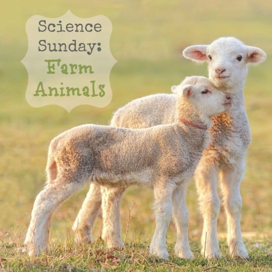 Science Sunday: Farm Animals