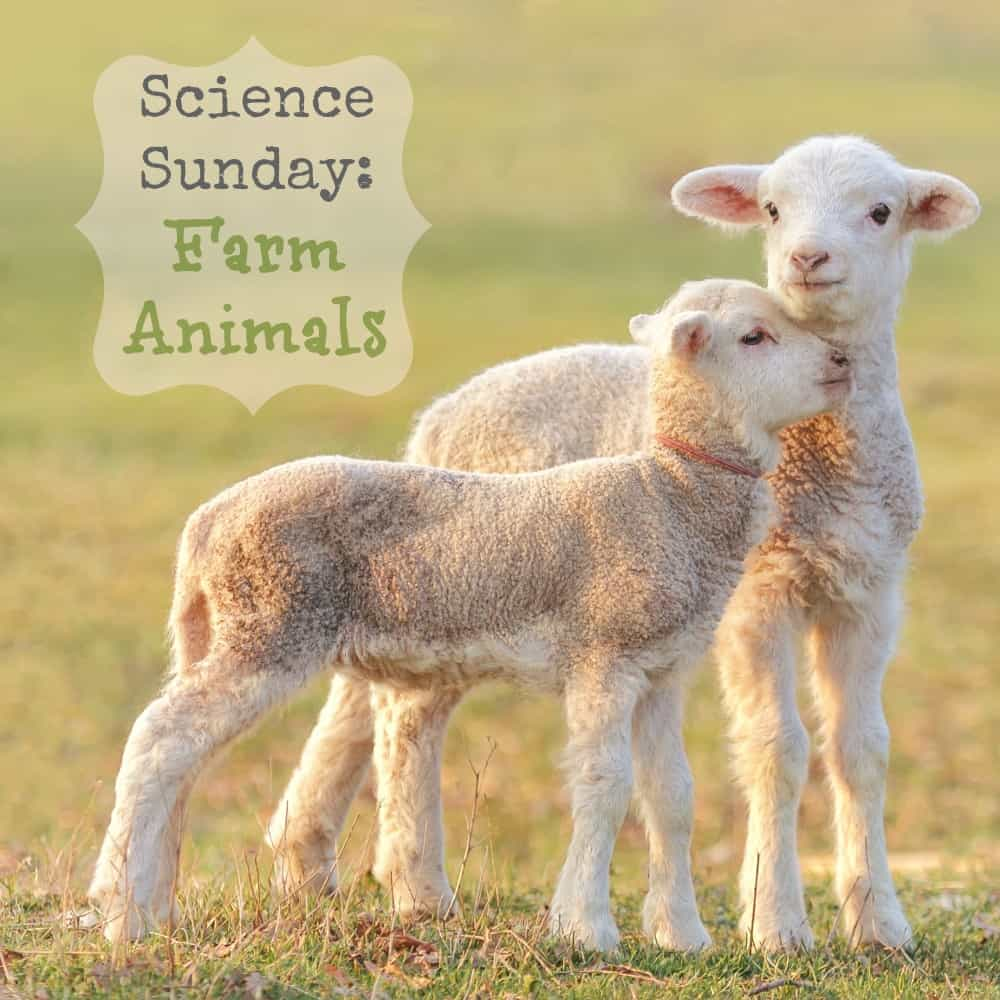 science sunday farm animals backyard brilliant