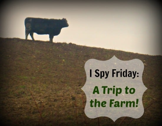 I Spy Friday: A Trip to the Farm!