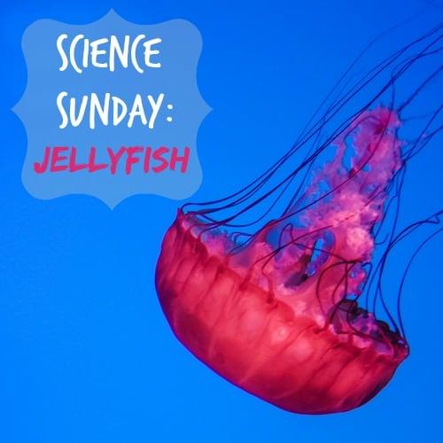 Science Sunday: Jellyfish
