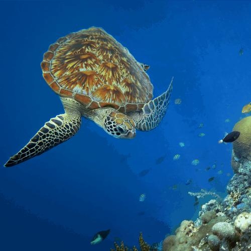 sciencesundyjellyfishseaturtle